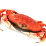 Catch Crab with an Astoria Fishing Guide